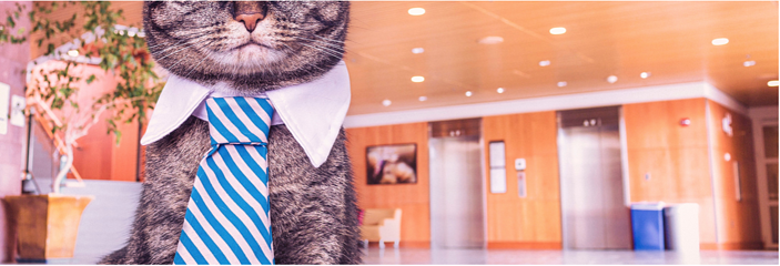 business-cat.png