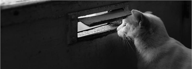 kitty_peeking_out_mailslot.png